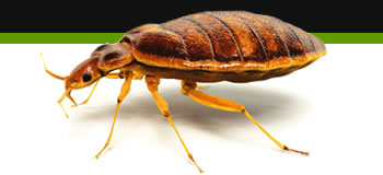bed bug removal leicester